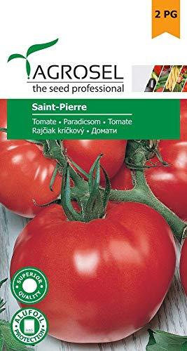 Tomatensamen - Tomate Saint-Pierre von Agrosel