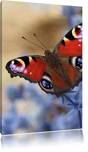 Pixxprint Schöner Schmetterling Pfauenauge, Format: 40x60 auf hochkantiges Leinwand, XXL riesige Bilder fertig gerahmt mit Keilrahmen, Kunstdruck auf Wandbild mit Rahmen.
