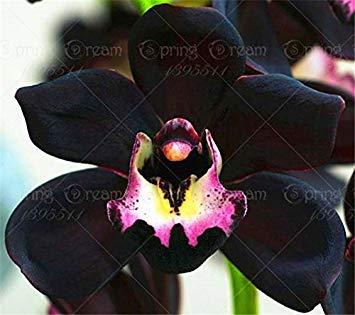 Vista 2016 nuovi 100 pz/borsa free phalaenopsis alberelli semi di orchidee bonsai piante da fiore vaso bonsai casa e giardino