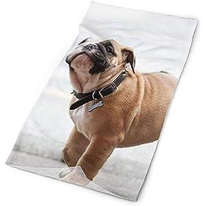 Not applicable Bulldog Chien Collier de Chien museau Foulard Sport écharpe Unisexe, 25X50Cm