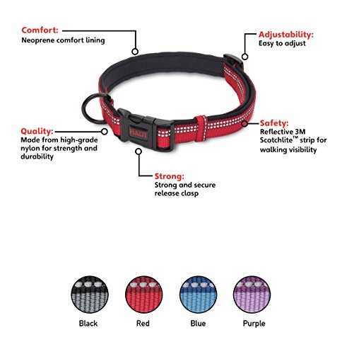 Company of Animals HALTI Collar