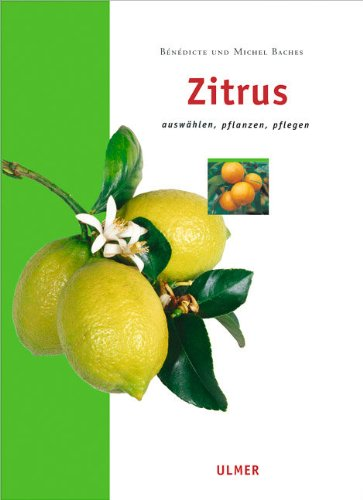 zitrus-auswahlen-pflanzen-pflegen