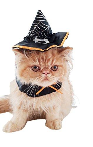 Liebenswürdig, kleiner Hund & Katze Hexe Halloween klein Katze Hund Hat