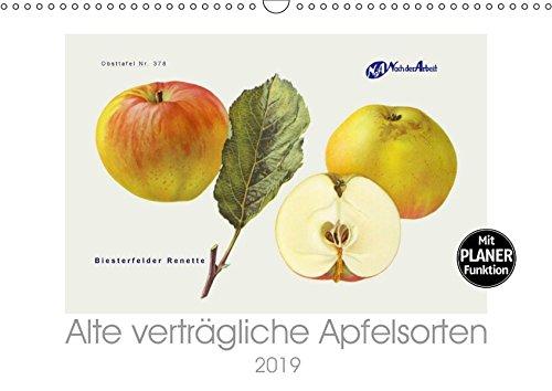Alte verträgliche Apfelsorten (Wandkalender 2019 DIN A3 quer): Alte Apfelsorten, die auch von Allergikern oft gut vertragen werden. (Geburtstagskalender, 14 Seiten ) (CALVENDO Lifestyle)