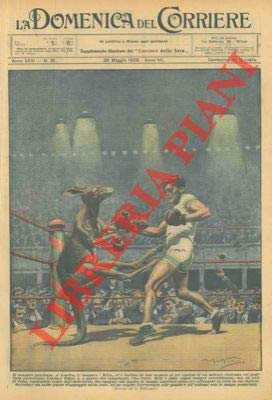Incontro di boxe tra un canguro ed un pugile professionista. par BELTRAME A. -