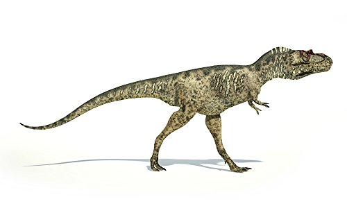 Leonello Calvetti/Stocktrek Images – Albertosaurus dinosaur on white background. Photo Print (45,72 x 27,18 cm)