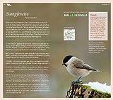 Gartenvögel: Die wichtigsten Arten entdecken und bestimmen - 3