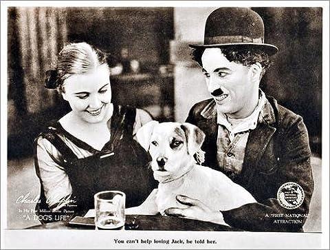 Impression sur bois 90 x 70 cm: A Dog's Life de Everett Collection