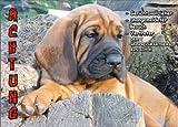INDIGOS UG - Türschild FunSchild - SE539 DIN A5 laminiert ACHTUNG Hund Hannoversche?r Schweißhund - für Käfig, Zwinger, Haustier, Tür, Tier, Aquarium