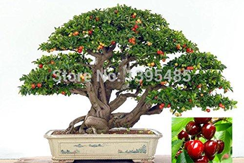 1111-promocion-hoy-en-dia-las-plantas-de-interior-exclusivos-la-necesidad-de-la-fruta-de-tiesto-taiw