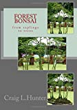 Forest Bonsai: From Saplings to Trees
