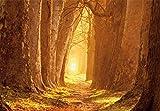 1art1 83498 Wälder - Magisches Licht, Waldweg Im Herbst, 3-Teilig Selbstklebende Fototapete Poster-Tapete 360 x 250 cm