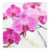 Bilderwelten Schiebegardinen Nahaufnahme Orchidee - Ohne Aufhängung, 4X 250 x 60cm