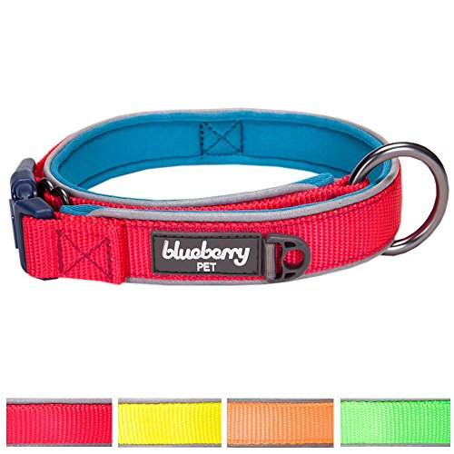 Blueberry Pet Summer Hope 3M Reflective Neoprene Padded Dog Collar