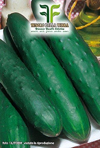 180 aprox – Gurkensamen Palomar – Cucumis Sativus in Originalverpackung Made in Italy – Gurken