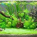 Beförderung! 200seeds 12 Arten Mixed Aquarium Gras Samen Indoor Schöne Uhr-Wasser-Wasserpflanzen Samen von SVI bei Du und dein Garten