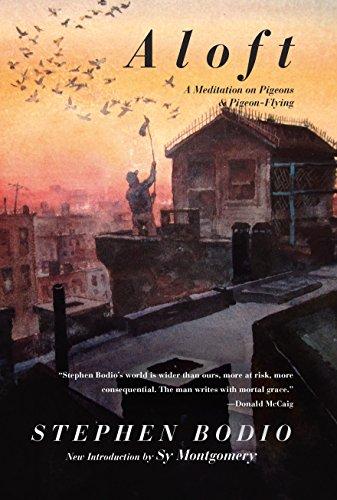 aloft-a-meditation-on-pigeons-pigeon-flying