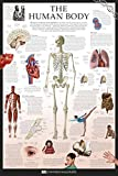 Human Body - Dorling Kindersley Eyewitness Wallcharts Poster Drucken (60,96 x 91,44 cm)