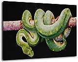 grüne Boa Constrictor Format 120x80 cm Bild auf Leinwand, XXL riesige Bilder fertig gerahmt mit Keilrahmen, Kunstdruck auf Wandbild mit Rahmen
