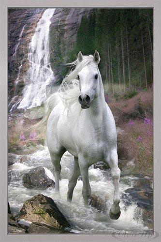 Close Up Pferde Poster Schimmel (66x96,5 cm) gerahmt in: Rahmen Silber