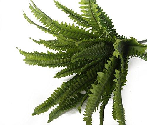 Closer To Nature 30cm Boston Farn Plug Betten Pflanze - 3