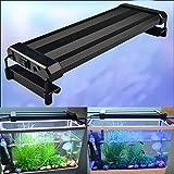 RunQiao 28CM 36SMD 6W Aquarium Fische Tank SMD LED Lampe Licht Aquariumbeleuchtung Aufsetzleuchte Weiß + Blau 2 Modus erweiterbar mit EU Netzstecker