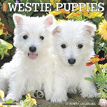 Just Westie Puppies 2020 Calendar