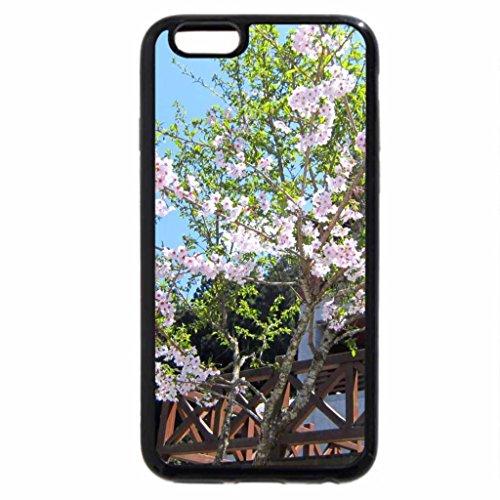 iPhone 6S / iPhone 6 Case (Black) Beautiful white sakura