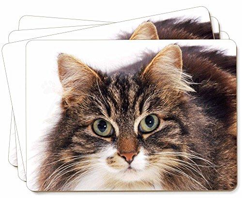 Advanta - Place Mats Gesicht der Schildpatt-Katze Bild Tischsets in Geschenkbox Weihnachten Tisch Ges