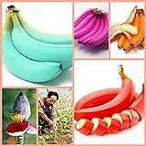 Shopvise 50 piezas Muy raras Plátano del arco iris Al aire libre Perenne Semillas interesantes Sabor de la leche Fruta deliciosa Para el hogar y Amp; Jardín: Claro