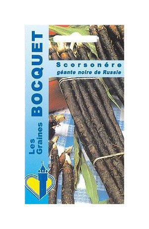 Les Graines Bocquet - Graines De Scorsonère Géante Noire De Russie - Graines Potagères À Semer - Sachet De 5Grammes