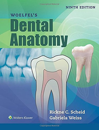 Woelfels Dental Anatomy by Rickne C. Scheid DDS (2016-02-19)