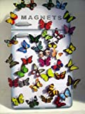 Set of 10 Assorted Butterfly Fridge Magnets