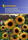 Kiepenkerl Sonnenblume Helianthus Hohe Riesen