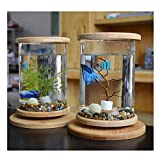 KLSD Kreative LED Desktop Mini Aquarium Desktop-Micro-Zylinder Rotierenden Aquarium Rund 1.5ml Baby Aquarium Geschenk Kind Mann Frau Tochter(Wassergras)