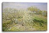 Stampa su Tela (80x60cm): Claude Monet - Primavera (Alberi di melo in Fiore) (1