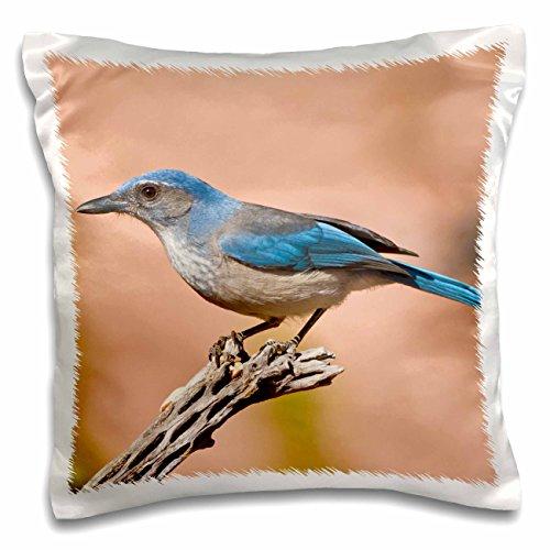 Danita Delimont - Larry Ditto - Birds - Western Scrub Jay, Aphelocoma californica, Texas, USA - 16x16 inch Pillow Case (pc_191294_1)