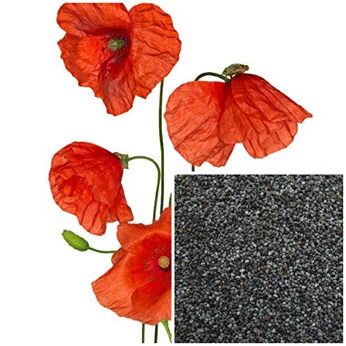 Seeds Pacakge NUR Nicht Pflanzen: Samen, Bio-Seife, die Versorgungsmaterialien Masse