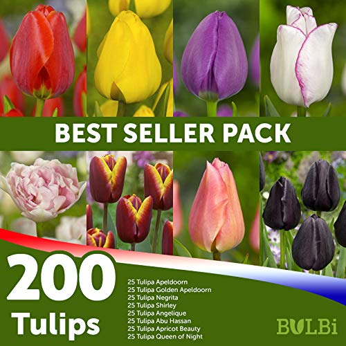 Tulpen Bestseller Mischung 200 blumenzwiebeln