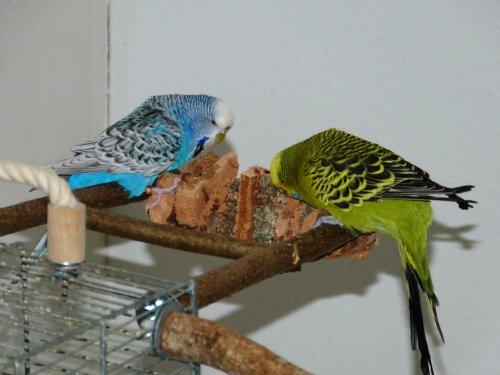 Kork Knabberbar - Tolles Vogelspielzeug gegen Langeweile im Vogelkäfig