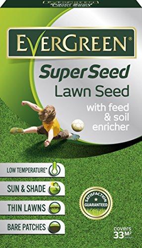 Evergreen 119457-semi per prato verde