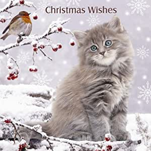 'Christmas Wishes' Robin & Silver Grey Tabby long haired kitten cat 10 pack of small square Christmas cards