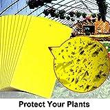 MEIWO Paquete de 20 Insectos bilaterales Amarillos de Doble Cara Trampas Tablero pegajoso para Insectos voladores como áfidos, Mosquitos de Hongos, Moscas Blancas, minadores de Hojas (Incluye Lazos)