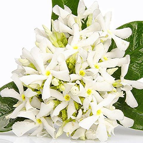 Néroli Orange Blossoms Premium la fabrication de bougies Huile de parfum, diffuseurs, huile brûleurs, aromathérapie, haute concentré 220ml