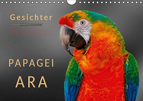 Gesichter - Papagei Ara (Wandkalender 2019 DIN A4 quer): Eindrucksvolle Bilder der exotischen Vögel. (Monatskalender, 14 Seiten ) (CALVENDO Tiere) (Kakadu Papagei Ara)