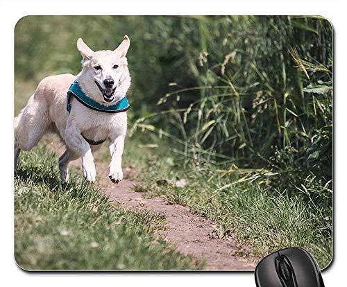 Mauspads - Hunderennen-Spaß-Tierhaustier-Spiellauf-Jagd groß