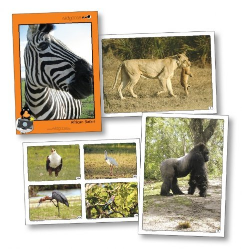 wildgoose Bildung wg2804African Safari Foto (20Stück) (Fotos African)