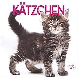 Das Katzenbuch: Kätzchen - 380 liebenswerte Fotos von kleinen Kätzchen und Katzenbabys. Mit Vorstellung der wichtigsten Katzenrassen und kleinem Katzenratgeber
