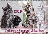 Katzen Persönlichkeiten 2019 (Wandkalender 2019 DIN A2 quer): Schöne Katzenbilder (Monatskalender, 14 Seiten ) (CALVENDO Tiere)