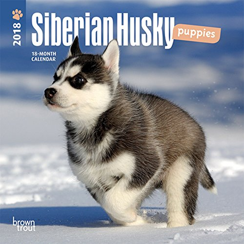 Siberian Husky Puppies 2018 Mini Wall Calendar